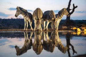 Jampress_viewbug_wildlife_safari_018